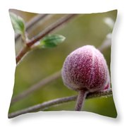Globe Flower Bud Before The Bloom Throw Pillow
