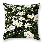 Glorious White Roses Db Throw Pillow