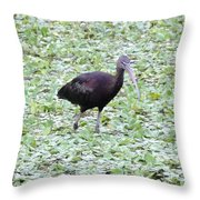 Glossy Ibis Throw Pillow
