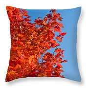 Glowing Fall Maple Colors 1 Throw Pillow