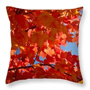 Glowing Fall Maple Colors 3 Throw Pillow