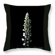 Glowing Goodyera Pubescens Throw Pillow