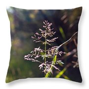 Glowing Grass In Palo Duro Canyon 100613.02 Throw Pillow