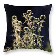 Glowing Thistle - 2 Throw Pillow