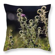 Glowing Thistle - 1 Throw Pillow