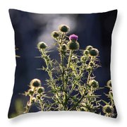 Glowing Thistle - 3 Throw Pillow