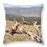 Gnarled Throw Pillow by Aaron Spong