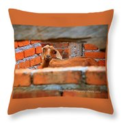 Goat In A Box Throw Pillow