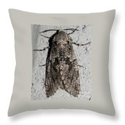 Goat Moth Throw Pillow