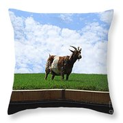 Goat On A Sod Roof In Sister Bay In Wisconsin Throw Pillow