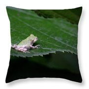 God's Tiny Tree Frog Throw Pillow