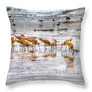 Godwits At San Elijo Beach Throw Pillow