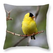 Gold Finch Throw Pillow