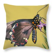 Gold Rim Swallowtail Butterfly Throw Pillow
