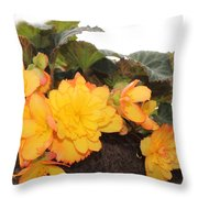Golden Beauty Throw Pillow