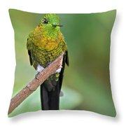 Golden-breasted Puffleg Throw Pillow