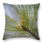 Golden Catkins Of The Great Pine Throw Pillow