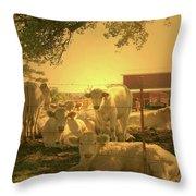 Golden Cows Throw Pillow