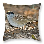 Golden-crowned Sparrow Throw Pillow