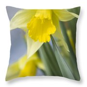 Golden Daffodils Throw Pillow