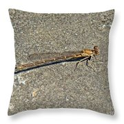 Golden Damselfly - Odonata - Suborder Zygoptera Throw Pillow