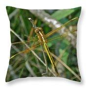 Golden Dragonfly At Rest Throw Pillow