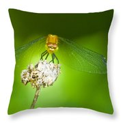 Golden Dragonfly On Perch Throw Pillow