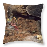 Golden Eagle Eats Throw Pillow