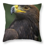 Golden Eagle Portrait Threatened Species Wildlife Rescue Throw Pillow