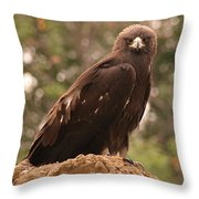 Golden Eagle Throw Pillow by Roger Snyder
