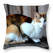 Golden Eyed Ferrel Throw Pillow