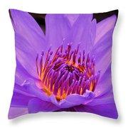 Golden Glow Of The Lavender Lotus Throw Pillow