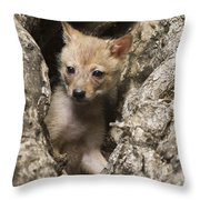 Golden Jackal Canis Aureus Cubs 2 Throw Pillow