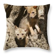 Golden Jackal Canis Aureus Cubs Throw Pillow