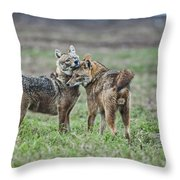 Golden Jackal Canis Aureus Throw Pillow
