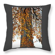 Golden Leaves In Mt Vernon Throw Pillow