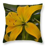 Golden Lily Sway 2013 Throw Pillow