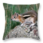 Golden Mantled Ground Squirrel Throw Pillow