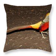 Golden Pheasant Male Throw Pillow