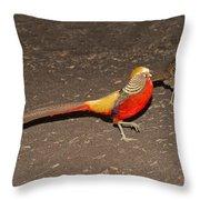 Golden Pheasant Pair Throw Pillow