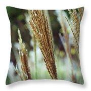 Golden Reeds Throw Pillow