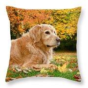 Golden Retriever Dog Autumn Day Throw Pillow