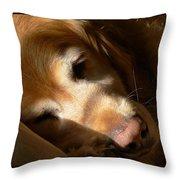 Golden Retriever Dog Quiet Time Throw Pillow