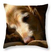 Golden Retriever Dog Sleeping In The Morning Light  Throw Pillow by Jennie Marie Schell