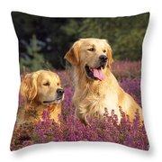 Golden Retriever Dogs In Heather Throw Pillow