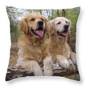 Golden Retriever Dogs Throw Pillow