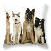Golden Retriever, Husky, Tervuren Throw Pillow