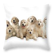 Golden Retriever Puppies, In A Line Throw Pillow