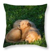 Golden Retriever Puppies Sleeping Throw Pillow by Linda Freshwaters Arndt