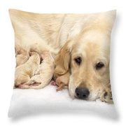 Golden Retriever Puppies Suckling Throw Pillow